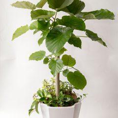 花鉢・鉢植え・観葉植物